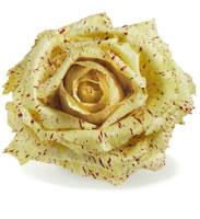 Castelfranco Variegated Radicchio | Herbs and Rare Seeds | Nichols ...